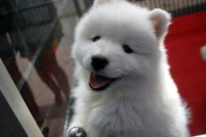 smiley-white-puppy-image