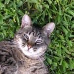 cat-on-back-in-green-grass-image