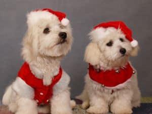 make-extra-money-Christmas-image