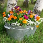 silver-bucket-of-colorful-flowers-image