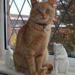 cat-in-window-seat-image
