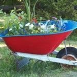 wheelbarrow-full-of-flowers-image