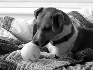 cute-dog-with-ball-image