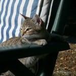 cat-lounging-in-sun-image