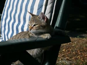 cat-lounging-in-sun-image