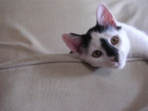 black-white-pink-cat-couch-image
