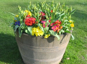 big-bucket-of-colorful-flowers-image