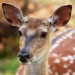 deer-in-woods-image