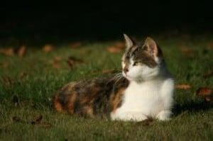 cat-lounging-image