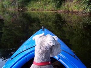 dog-on-blue-boat-image