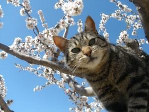 cat-tree-background-image