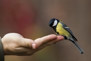a-bird-in-the-hand-image