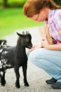 mom-feeds-baby-goat-image