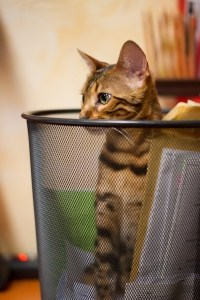 cat-peeping-out-trash-can-image