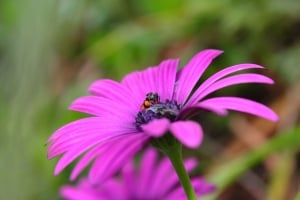 purple-flower-bee-green-background-image