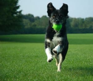 dog-jumping-with-ball-in-mouth-image