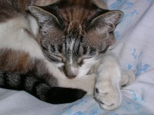 curled-up-cat-image
