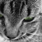black-and-white-cat-green-eyes-image