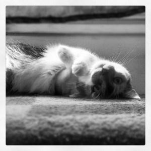 black-and-white-cat-on-back-image
