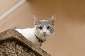 cat-peeking-over-edge-image