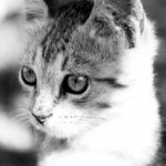shy-cat-black-and-white-image