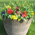 wooden-bucket-yellow-red-flowers-image