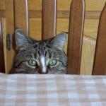 hello-again-cat-image