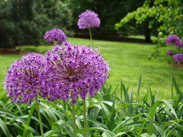 purple-flower-field-of-green-image