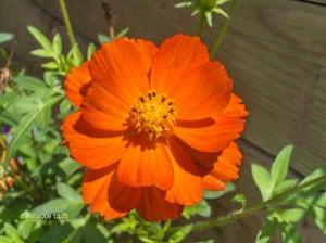 bright-orange-flower-image