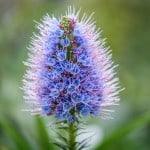 purple-cone-like-flower-image