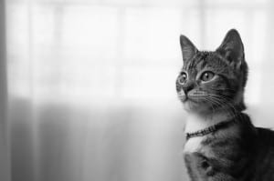 black-white-cat-corner-image