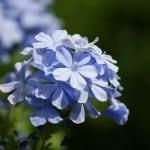 purple-spring-flowers-close-image