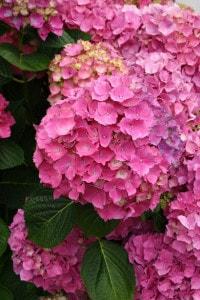 pink-flower-ball-bouquet-image