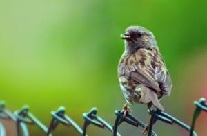 bird-on-fence-green-background-image