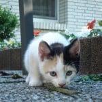suspicious-cat-image