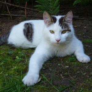 cat-sprawled-on-grass-image