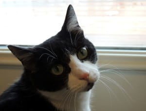 black-white-cat-over-the-shoulder-image