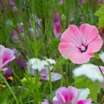 wild-flowers-pink-purple-image