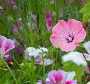 wild-flowers-pink-purple-image