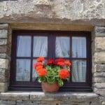 geraniums-in-window-image
