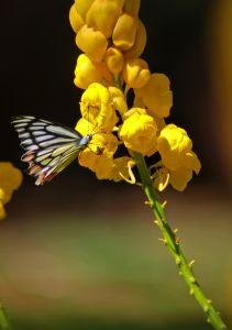yellow-flower-orange-black-butterfly-stalk-image
