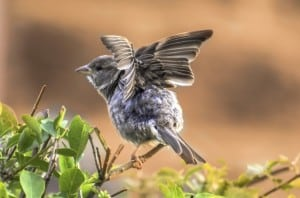 baby-bird-flapping-wings-image