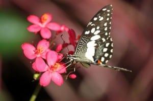 white-black-butterfly-on-flower-image