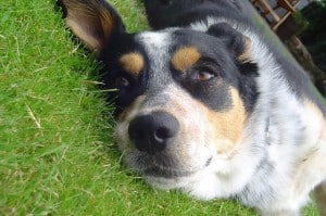 cute-dog-lying-in-grass-image
