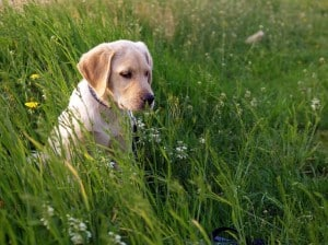 dog-in-high-grass-image