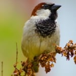 fall-sparrow-image