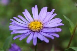 flower-175995_640