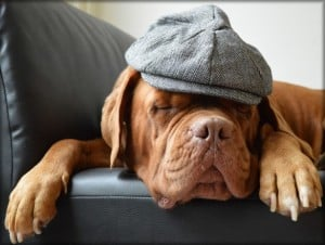 dog-and-hat-image