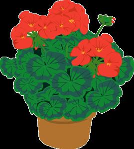 geranium-graphic-image