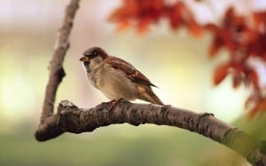 sparrow-fall-leaves-image